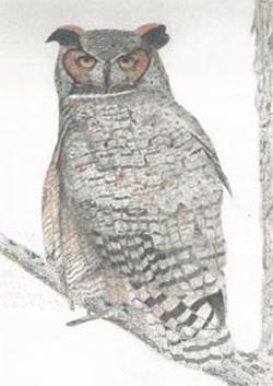 Horned Owl by Ken Kitson