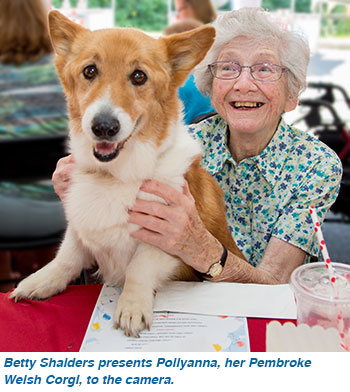 Betty Shalders presents Pollyanna, her Pembroke Welsh Corgi, to the camera.